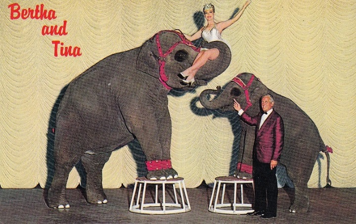Performing Pachyderm